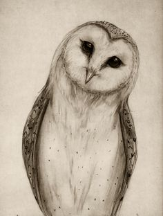 Barn Owl Sketch Art Print by Isaiah K Stephens