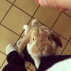 My little man begging for treats - Imgur