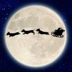 Santa & doxies