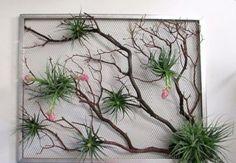 plante de aer 9