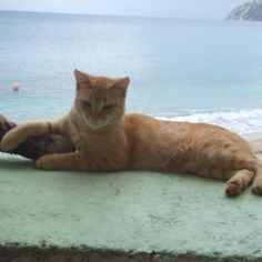 Cat on Lefkas