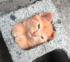 Sitter katten i en tegelsten??