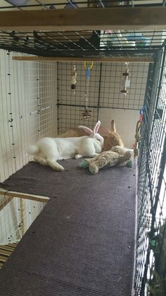 Babs and Lola bunny. 7 months