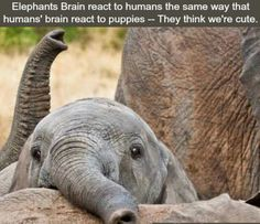 I have not seen one thing about elephants to make me not love them