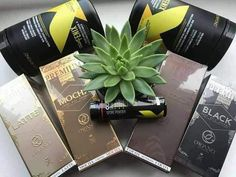 Learn why millions are raving over our AMAZING Organo Gold gourmet coffee, teas, and weight management products. Coffee Drinks, Coffee Coffee, Coffee Health, Weight Loss Detox, New Tricks, Weight Management, Mochi, Immune System, You Changed