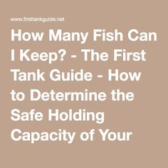 How Many Fish Can I Keep? - The First Tank Guide - How to Determine the Safe Holding Capacity of Your Fish Tank 30 Gallon Fish Tank, Fish Tanks, Aquarium Ideas, How Many, Vivarium, Tropical Fish, The One, Terrarium, I Can