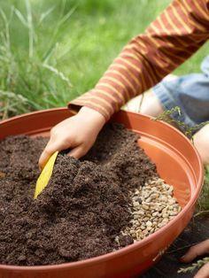 How to Plant a Cactus Container Garden : Outdoors : Home & Garden Television