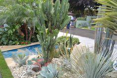 Tropical and Desert #ChelseaFlowerShow2015