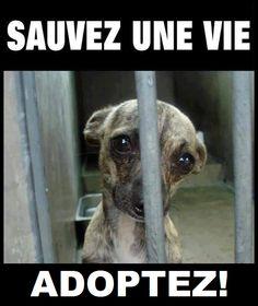 Sauvez une vie : adoptez !