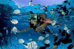 Ven a disfrutar tu vacaciones a cancun y riviera maya con toda la familia y disfrute de las hermosas playas de cancun y riviera maya.aprovecha las ofertas que te ofrece ocean coral and turquesa ubicado en la riviera maya mexico..y clic en la image y reserve ahora