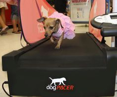 Wearing a dress to work out...my girls would totally do that! Love this Dog Pacer Treadmill. www.dogpacer.com