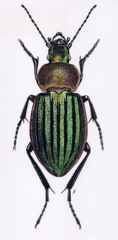 insect paintings - Google Search