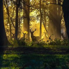 Nick Lucas took this shot of deer on the first morning of the autumn equinox in Ashley Heath Dorset. #england #englandsbigpicture #woods #autumn #woodland #dorset #animals #sunrise #dawn #photoftheday #picoftheday #equinox #silhouette