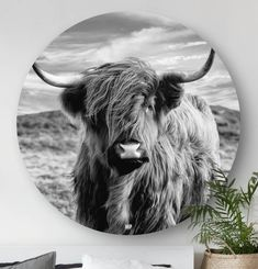 Red Feature Wall, Sandro, Rare Horses, Highland Cattle, Gray Aesthetic, Ibiza Fashion, Cute Animal Pictures, Aesthetic Pictures, Home Deco
