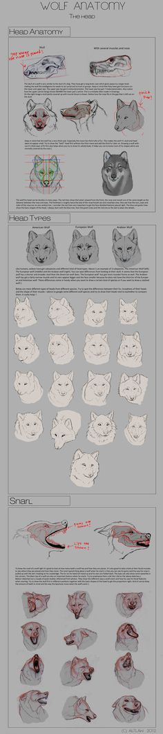 Wolf Anatomy - Part 3 by Autlaw on deviantART