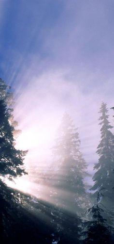 Winter Snow Trees Forest Sun Snow Forest, Tree Forest, Shoveling Snow, Snow Trees, Nature Artwork, Sun Rays, Winter Snow, Winter Wonderland, Hd Wallpaper