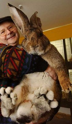 that's a really big bunny