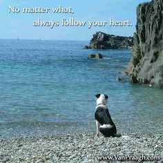 Inspirational Quotes   James Van Praagh No matter what, always follow your heart.