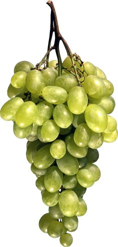 This high quality free PNG image without any background is about grape, berry, grapes, fruit, green grapes and food. Photo Clipart, Fruits Images, Wine Deals, Green Grapes, Png Photo, Wine Fridge, The Duff, Wines, Art Projects