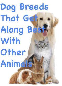 DogBreeds ThatGetAlongBest WithOtherAnimals  | dog facts | dog facts interesting | puppy facts | dog life | dog info