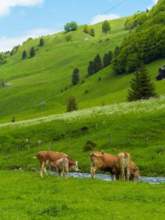 Living In Europe, Swiss Chalet, Covered Bridges, Farm Life, Alps, Country Life, Farm Animals, Beautiful Landscapes, Pet Birds