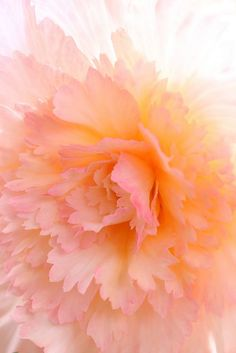 Peachy-pink begonias for an unexpected 'greenhouse' element