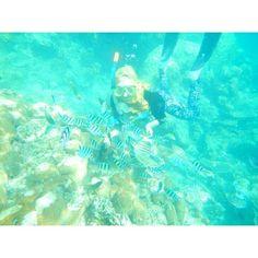Diving in Karimunjawa