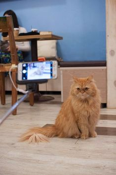 Cats From Seoul South Korea Cats Cute Cats Photos Cat Cafe