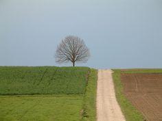Tree by Adnan Yahya, via Flickr