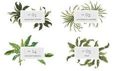 Dani Naturals - Spa Bath Product Packaging Design