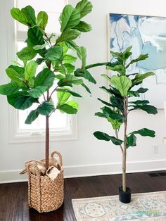 The Best Faux Fiddle Leaf Fig Trees & Tips - Life On Virginia Street - The best faux fiddle leaf fig trees for all budgets along with helpful styling tips and what to loo - Fake Indoor Trees, Fake Trees, Artificial Plants, Fig Leaf Tree, Fig Leaves, Fig Tree Plant, House Plants Decor, Plant Decor, Fake Plants Decor