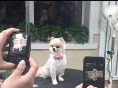 これがプロのアイドル犬か