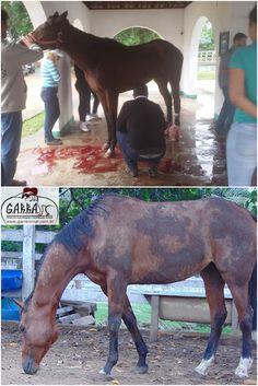 G.A.R.R.A. - Grupo de Ação, Resgate e Reabilitação Animal: O G.A.R.R.A. precisa da sua ajuda! Colabore!