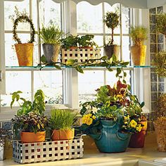 Growing Herbs in the Kitchen | MyRecipes.com