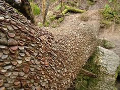 apparently money DOES grow on trees... #Money_Tree