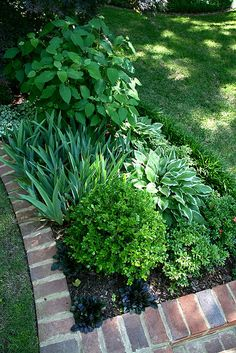 Brinker Garden - shade plantings by Pandorea..., via Flickr
