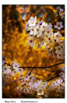 ✯ Blossom of trees in Spring