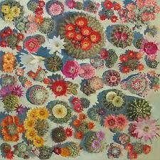 Lucy Cullerton cactus series
