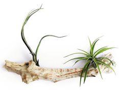 10 kiirthatatlan szobanövény   Hobbikert Magazin Wreaths, Plants, Home Decor, Decoration Home, Room Decor, Planters, Bouquet, Plant, Planting
