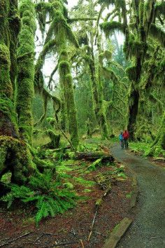 """""""Olympic National Parkis a pretty spectacular place, but one of the…"""