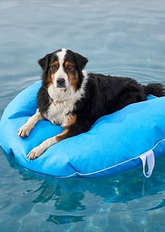 With our Dog Pool Float and Lounger, Fido can float in style—or stay cool as he lounges on deck.