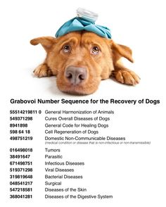 Grabovoi Number Sequence for Dogs