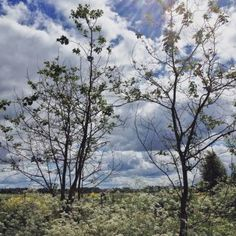 summer landscape with two trees - Limited Edition 1 of 15