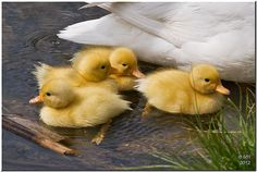 Unashamedly Cute! | Flickr - Fotosharing!