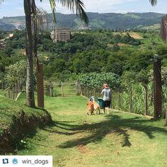 Golden Retriever Partiu trilha!!! @win_dogs !! #Bob #Marley #AumigosDoBobEMarley #windogs #hotelparacaes #hotelpet #daycare #alphaville #barueri #sampa #goldenretriever #goldenretrieverbrasil #goldenretrieverworld #dogsofinstagram #instapet #instapetbrasil #instaBobEMarley by bob_marley_goldenretriever