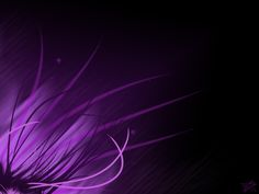 Purple Backgrounds | New Collections Purple Wallpapers HD | New Best Wallpapers 2011 ...