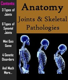 Group activity lesson on the skeletal system science education joints pathology of the skeletal system powerpoint worksheet science fandeluxe Image collections