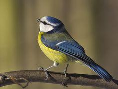 Comment nommer les oiseaux sans les voir   Vigie Nature