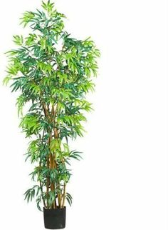 6' Fancy Style Bamboo Silk Tree 6' Fancy Style Bamboo Silk Tree by DSD. $388.50. Brand Name: DSD Mfg#: 1066789. Picture may wrongfully represent. Please read title and description thoroughly.. Shipping Weight: 72.00 lbs. This product may be prohibited inbound shipment to your destination.. Please refer to SKU# ATR25212050 when you inquire.. 6' Fancy Style Bamboo Silk Tree . Need a break from the office? This grand Bambusa will have you dreaming of the Asian tropics. At six feet t...