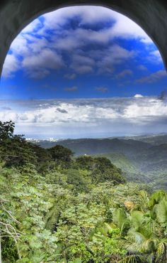 El Yunque Rainforest Mountain- Puerto Rico